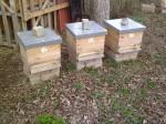 včely 210812 (1)