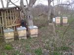 včely 210812